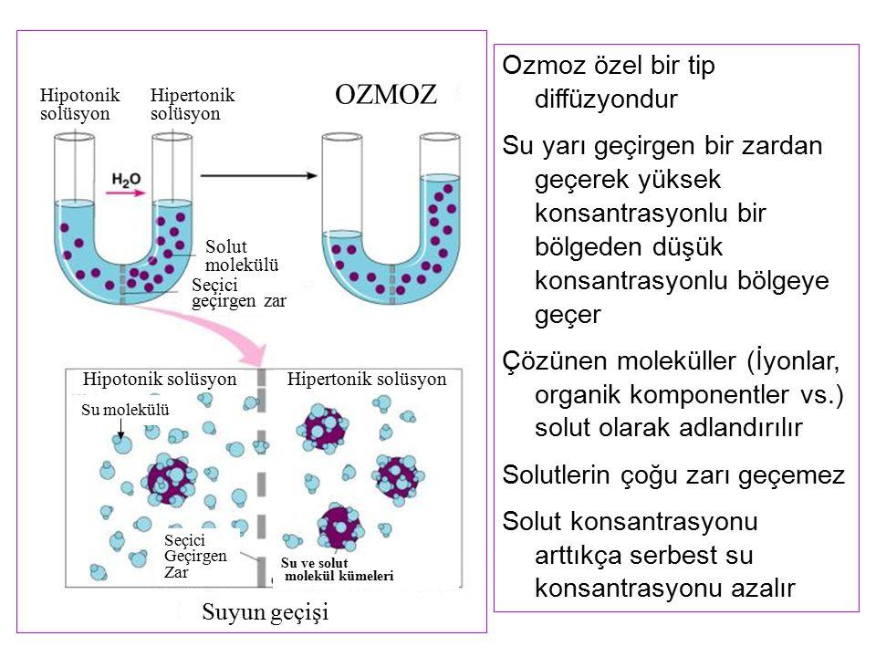 Ozmoz özel bir tip diffüzyondur Su yarı geçirgen bir zardan geçerek yüksek konsantrasyonlu bir bölgeden düşük konsantrasyonlu bölgeye geçer Çözünen mo