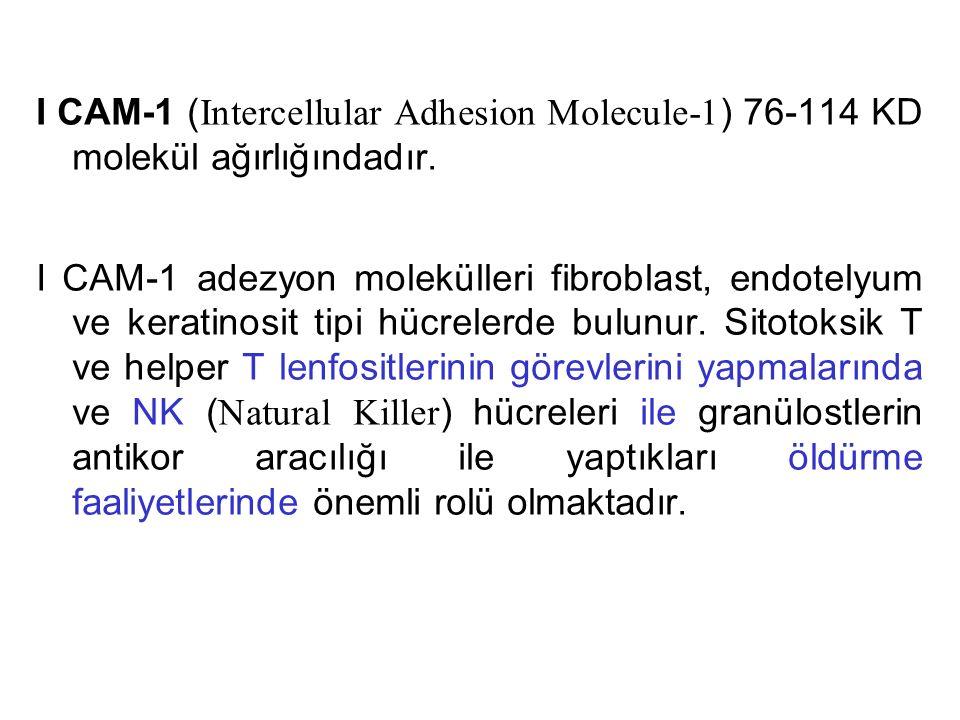 I CAM-1 ( Intercellular Adhesion Molecule-1 ) 76-114 KD molekül ağırlığındadır. I CAM-1 adezyon molekülleri fibroblast, endotelyum ve keratinosit tipi