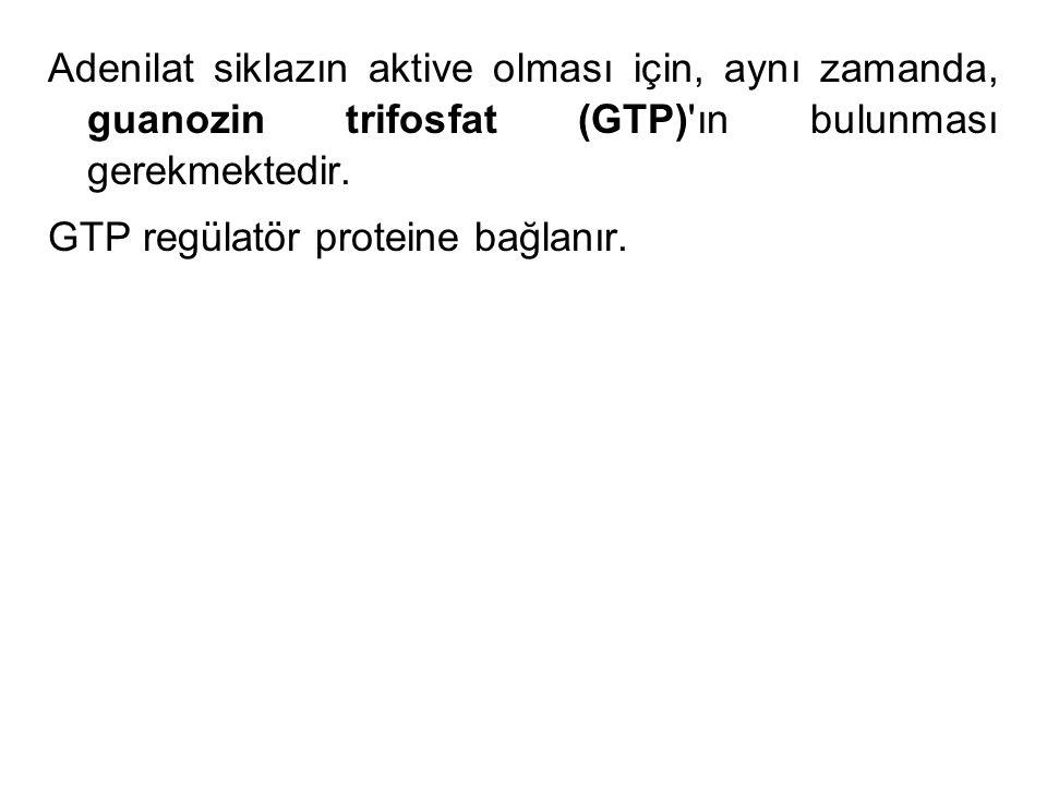 Adenilat siklazın aktive olması için, aynı zamanda, guanozin trifosfat (GTP)'ın bulunması gerekmektedir. GTP regülatör proteine bağlanır.