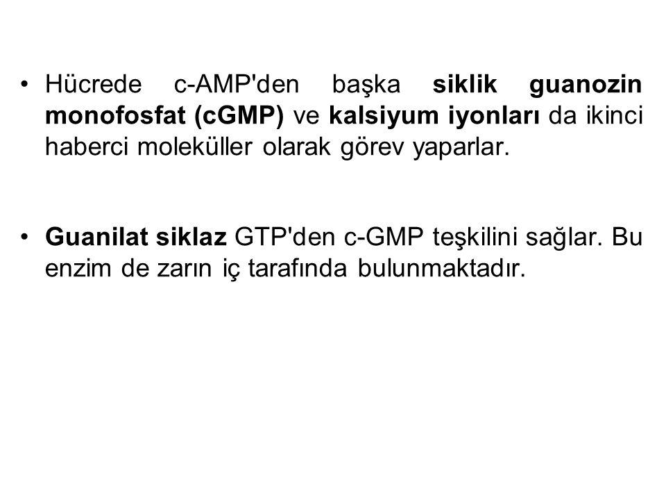Hücrede c-AMP'den başka siklik guanozin monofosfat (cGMP) ve kalsiyum iyonları da ikinci haberci moleküller olarak görev yaparlar. Guanilat siklaz GTP