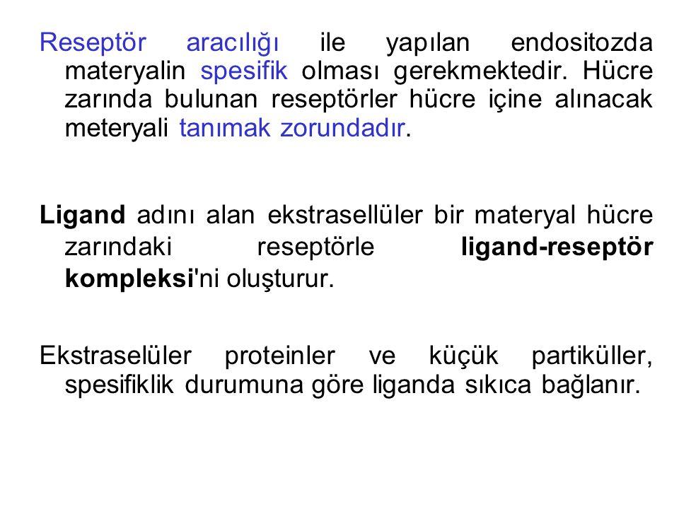 Reseptör aracılığı ile yapılan endositozda materyalin spesifik olması gerekmektedir. Hücre zarında bulunan reseptörler hücre içine alınacak meteryali