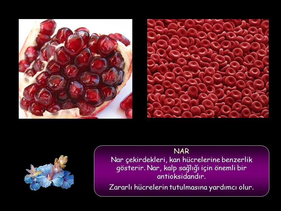 NAR Nar çekirdekleri, kan hücrelerine benzerlik gösterir.