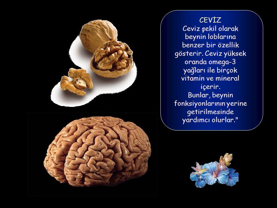 CEVİZ Ceviz şekil olarak beynin loblarına benzer bir özellik gösterir.