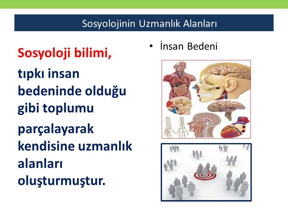 Sosyoloji bilimi, tıpkı insan bedeninde olduğu gibi toplumu parçalayarak kendisine uzmanlık alanları oluşturmuştur.