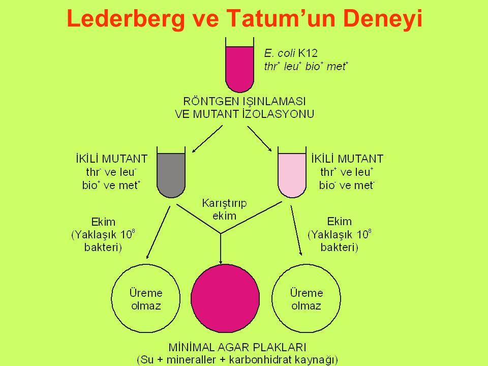 Lederberg ve Tatum'un Deneyi