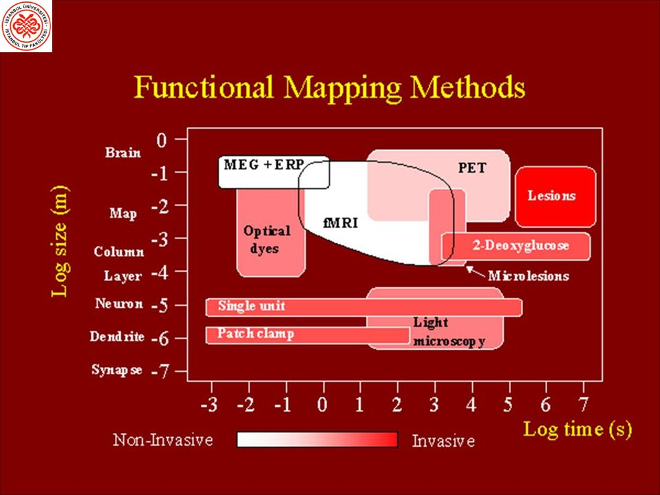 Beyin İşlevlerini Araştırma Yöntemleri sNöronların hasarlanması veya cerrahi olarak çıkarılması sNöronların uyarılması Elektriksel, manyetik uyaranlarla veya kimyasallarla sNöropsikolojik testler sElektriksel (EEG) ve manyetik (MEG) kayıtlar sİşlevsel Beyin Görüntüleme Yöntemleri