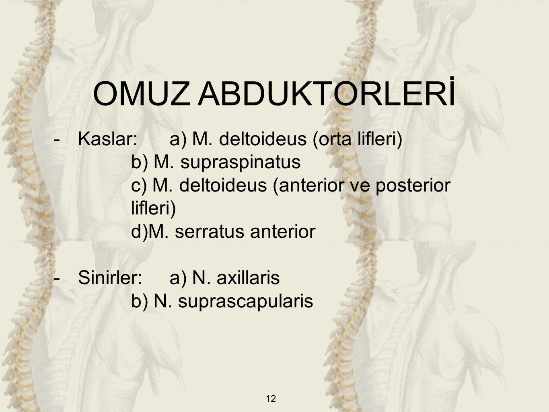 12 -Kaslar:a) M. deltoideus (orta lifleri) b) M. supraspinatus c) M.