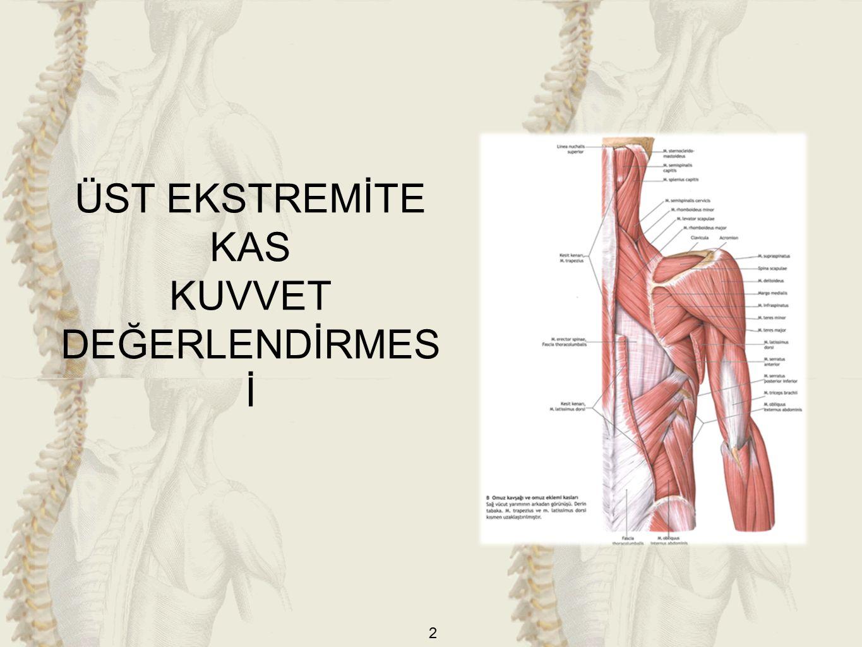 33 DİRSEK FLEKSÖRLERİ -Zayıf (2): M.biceps brachi supinasyonda, m.