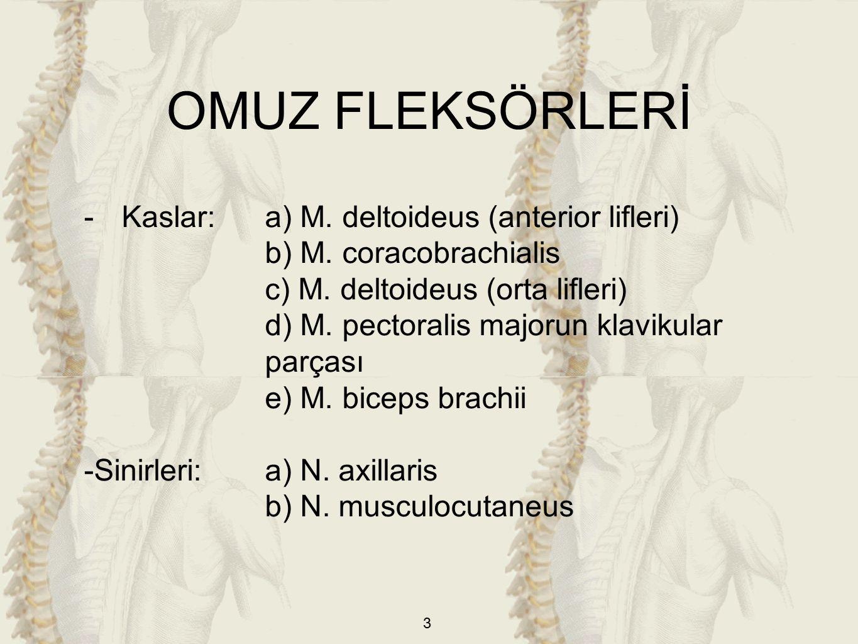 3 -Kaslar:a) M. deltoideus (anterior lifleri) b) M.