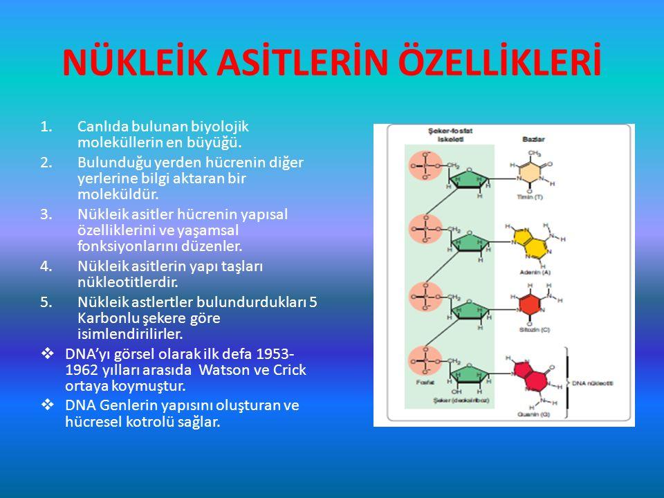 NÜKLEİK ASİTLERİN ÖZELLİKLERİ 1.Canlıda bulunan biyolojik moleküllerin en büyüğü. 2.Bulunduğu yerden hücrenin diğer yerlerine bilgi aktaran bir molekü