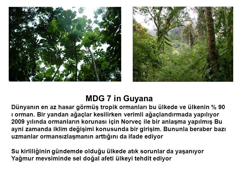 MDG 7 in Guyana Dünyanın en az hasar görmüş tropik ormanları bu ülkede ve ülkenin % 90 ı orman. Bir yandan ağaçlar kesilirken verimli ağaçlandırmada y