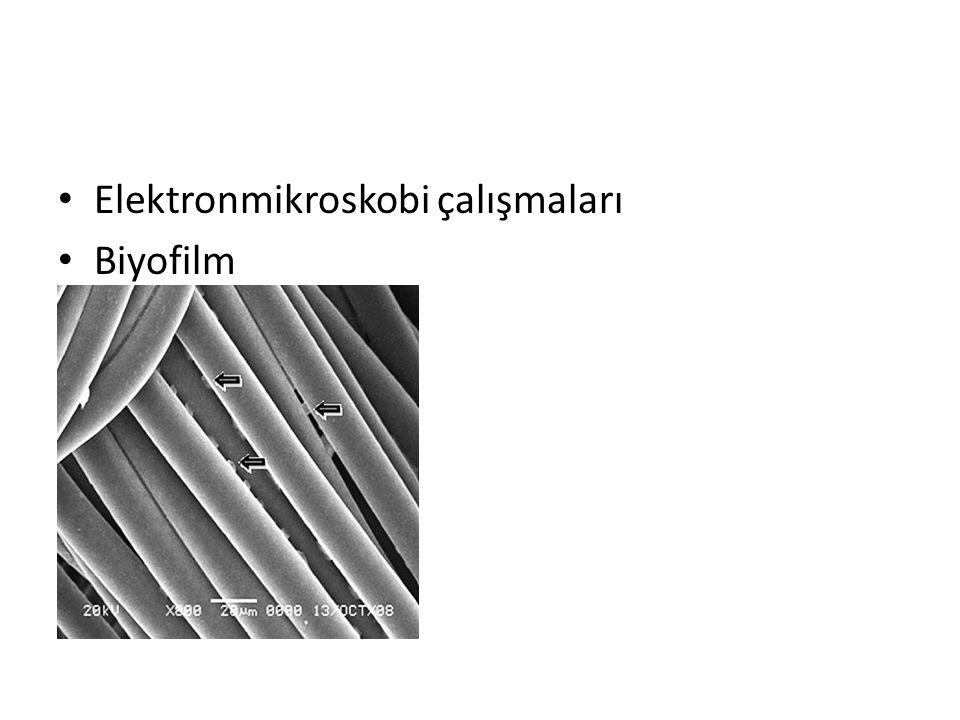 Elektronmikroskobi çalışmaları Biyofilm