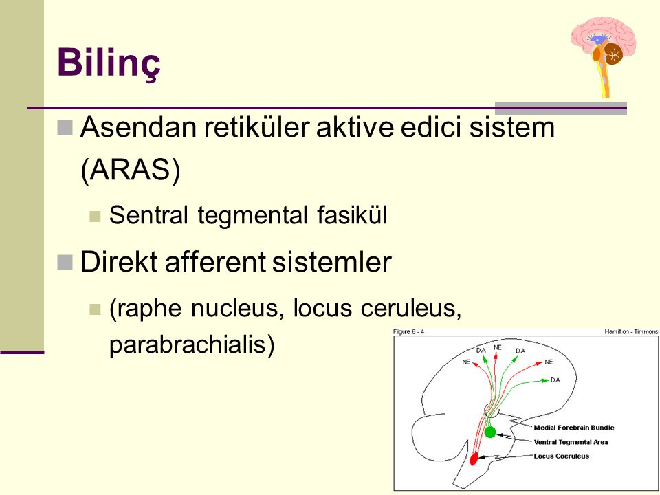 Bilinç Asendan retiküler aktive edici sistem (ARAS) Sentral tegmental fasikül Direkt afferent sistemler (raphe nucleus, locus ceruleus, parabrachialis)