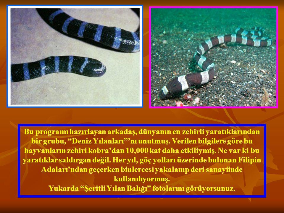 """Bu programı hazırlayan arkadaş, dünyanın en zehirli yaratıklarından bir grubu, """"Deniz Yılanları""""'nı unutmuş. Verilen bilgilere göre bu hayvanların zeh"""