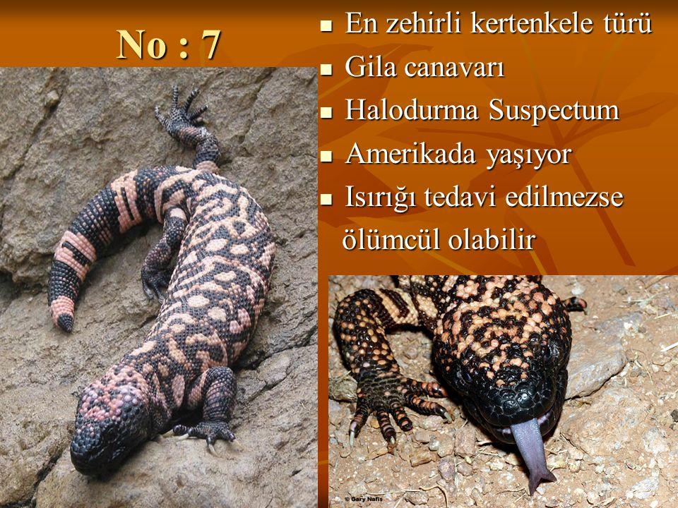 No : 7 En zehirli kertenkele türü En zehirli kertenkele türü Gila canavarı Gila canavarı Halodurma Suspectum Halodurma Suspectum Amerikada yaşıyor Ame