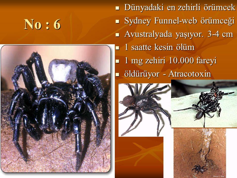 No : 6 Dünyadaki en zehirli örümcek Dünyadaki en zehirli örümcek Sydney Funnel-web örümceği Sydney Funnel-web örümceği Avustralyada yaşıyor. 3-4 cm Av