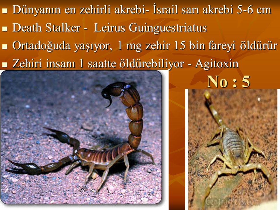 No : 5 Dünyanın en zehirli akrebi- İsrail sarı akrebi 5-6 cm Dünyanın en zehirli akrebi- İsrail sarı akrebi 5-6 cm Death Stalker - Leirus Guinguestria