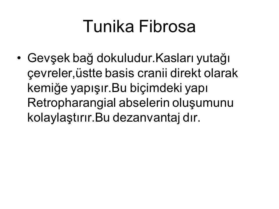 Tunika Fibrosa Gevşek bağ dokuludur.Kasları yutağı çevreler,üstte basis cranii direkt olarak kemiğe yapışır.Bu biçimdeki yapı Retropharangial abselerin oluşumunu kolaylaştırır.Bu dezanvantaj dır.