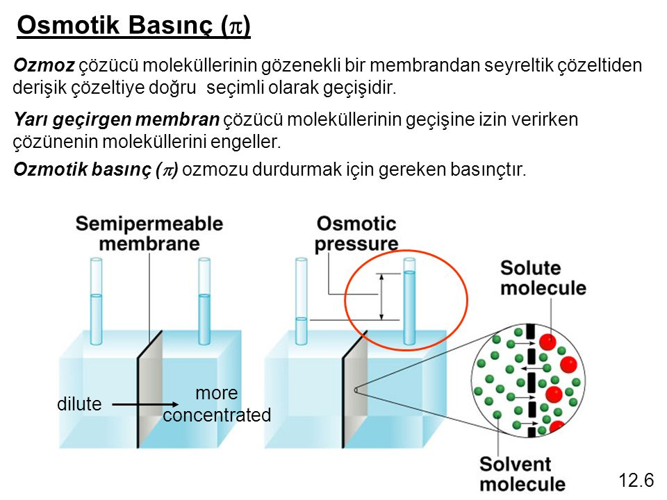 Osmotik Basınç (  ) 12.6 Ozmoz çözücü moleküllerinin gözenekli bir membrandan seyreltik çözeltiden derişik çözeltiye doğru seçimli olarak geçişidir.