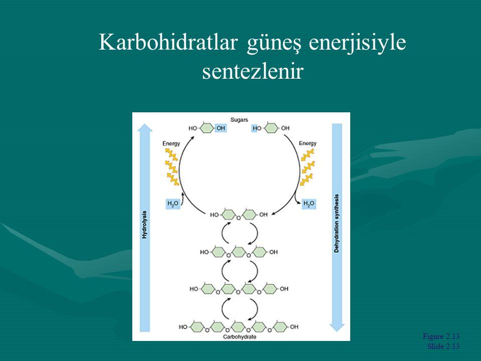 Figure 2.13 Slide 2.13 Karbohidratlar güneş enerjisiyle sentezlenir