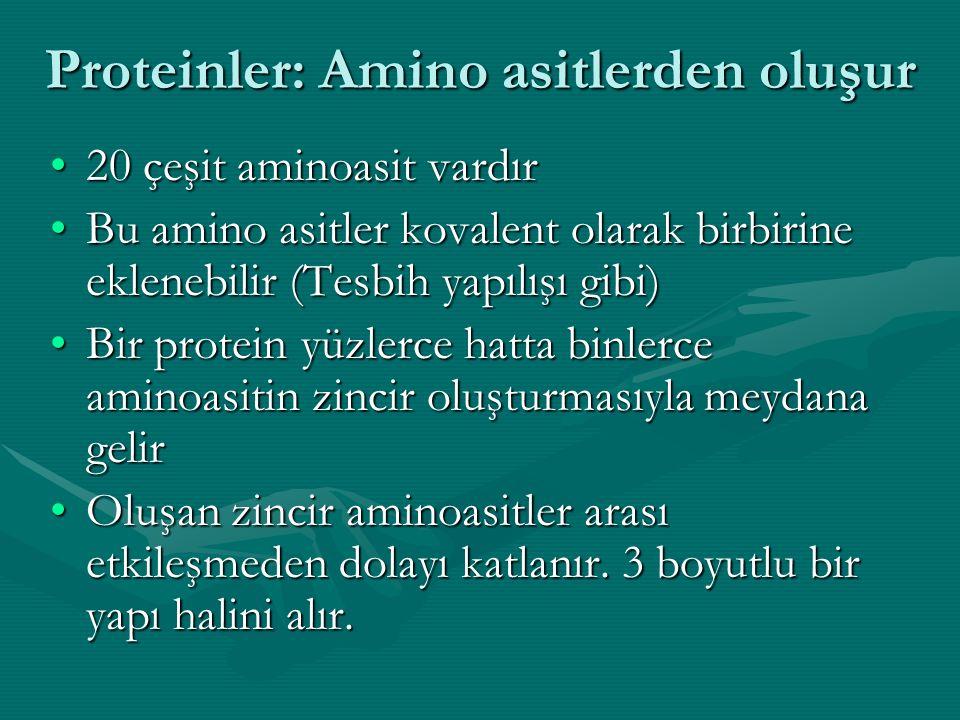 20 çeşit aminoasit vardır20 çeşit aminoasit vardır Bu amino asitler kovalent olarak birbirine eklenebilir (Tesbih yapılışı gibi)Bu amino asitler kovalent olarak birbirine eklenebilir (Tesbih yapılışı gibi) Bir protein yüzlerce hatta binlerce aminoasitin zincir oluşturmasıyla meydana gelirBir protein yüzlerce hatta binlerce aminoasitin zincir oluşturmasıyla meydana gelir Oluşan zincir aminoasitler arası etkileşmeden dolayı katlanır.