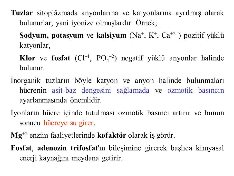 Tuzlar sitoplâzmada anyonlarına ve katyonlarına ayrılmış olarak bulunurlar, yani iyonize olmuşlardır. Örnek; Sodyum, potasyum ve kalsiyum (Na +, K +,