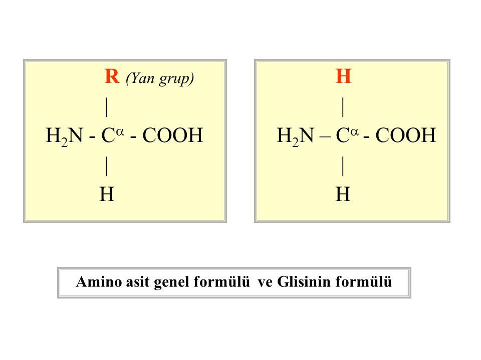 R (Yan grup) | H 2 N - C  - COOH | H | H 2 N – C  - COOH | H Amino asit genel formülü ve Glisinin formülü