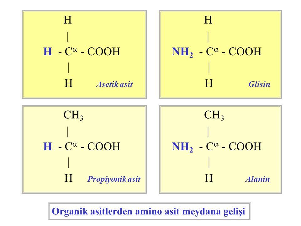 CH 3 | H - C  - COOH | H Propiyonik asit CH 3 | NH 2 - C  - COOH | H Alanin H | H - C  - COOH | H Asetik asit H | NH 2 - C  - COOH | H Glisin Organik asitlerden amino asit meydana gelişi