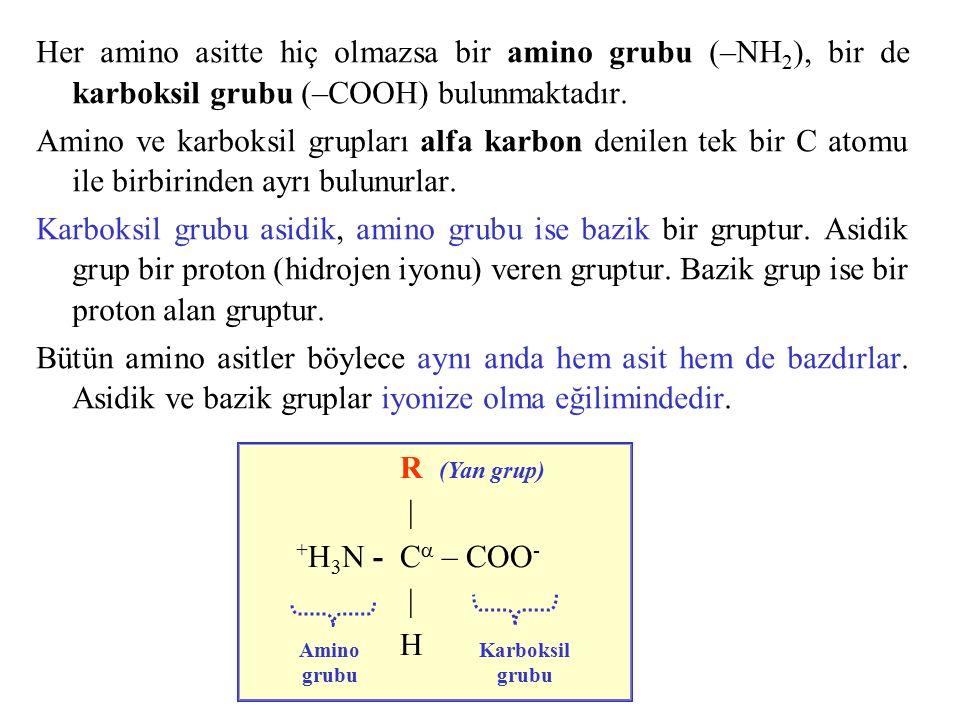 Her amino asitte hiç olmazsa bir amino grubu (–NH 2 ), bir de karboksil grubu (–COOH) bulunmaktadır. Amino ve karboksil grupları alfa karbon denilen t