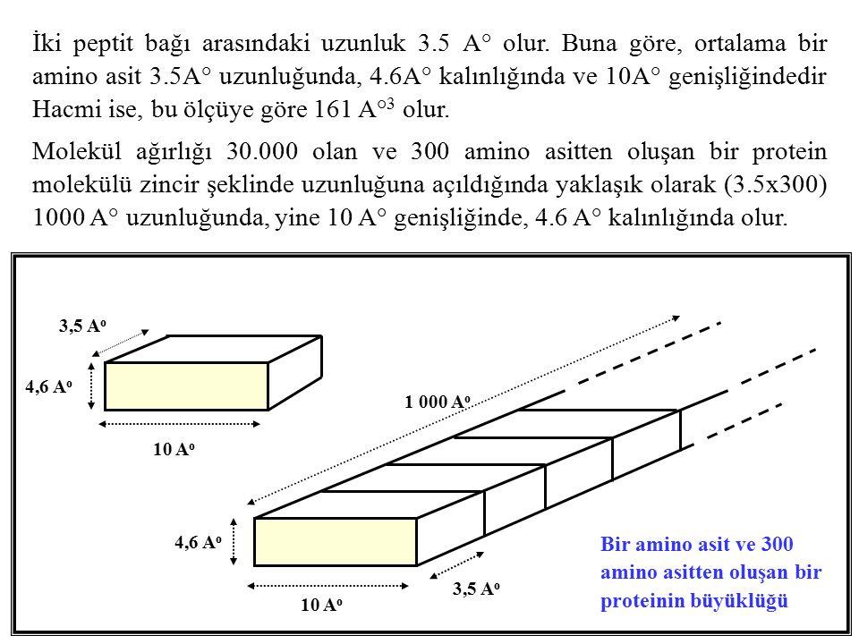 1 000 A o 4,6 A o 10 A o 4,6 A o 3,5 A o 10 A o 3,5 A o Bir amino asit ve 300 amino asitten oluşan bir proteinin büyüklüğü İki peptit bağı arasındaki uzunluk 3.5 A° olur.