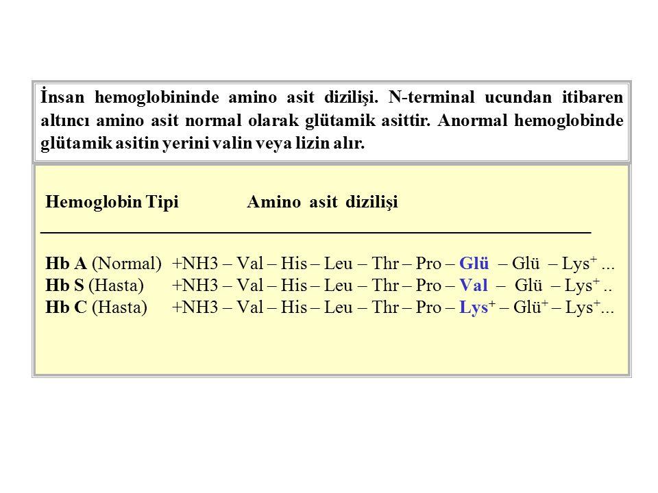 Hemoglobin Tipi Amino asit dizilişi ____________________________________________________________ Hb A (Normal)+NH3 – Val – His – Leu – Thr – Pro – Glü – Glü – Lys +...