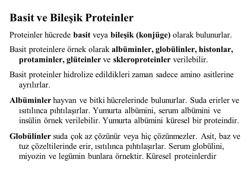 Basit ve Bileşik Proteinler Proteinler hücrede basit veya bileşik (konjüge) olarak bulunurlar.