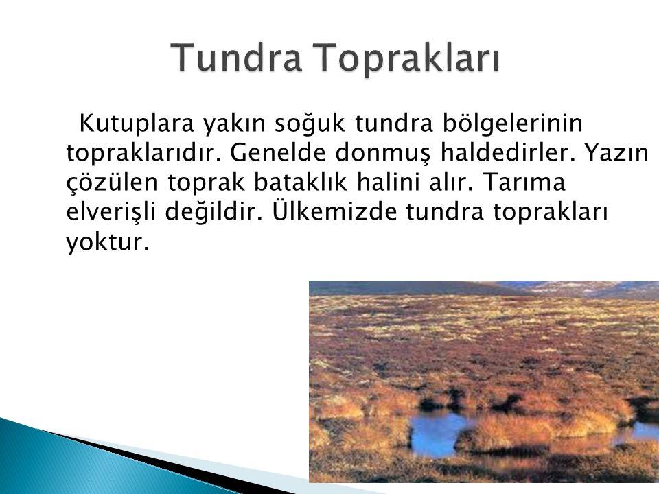 Kutuplara yakın soğuk tundra bölgelerinin topraklarıdır. Genelde donmuş haldedirler. Yazın çözülen toprak bataklık halini alır. Tarıma elverişli değil