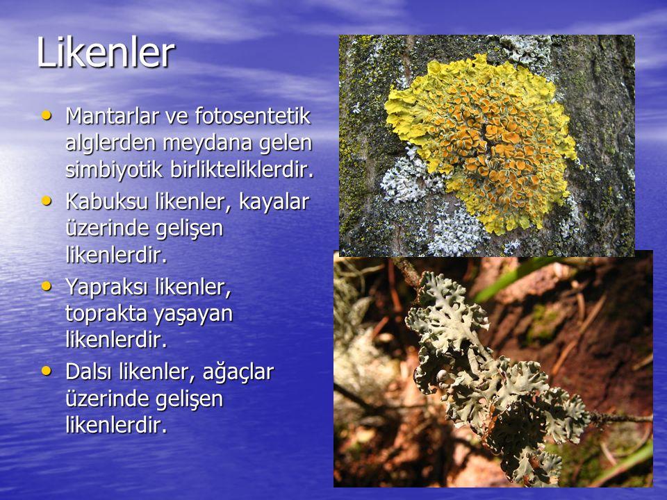 Likenler Mantarlar ve fotosentetik alglerden meydana gelen simbiyotik birlikteliklerdir. Mantarlar ve fotosentetik alglerden meydana gelen simbiyotik