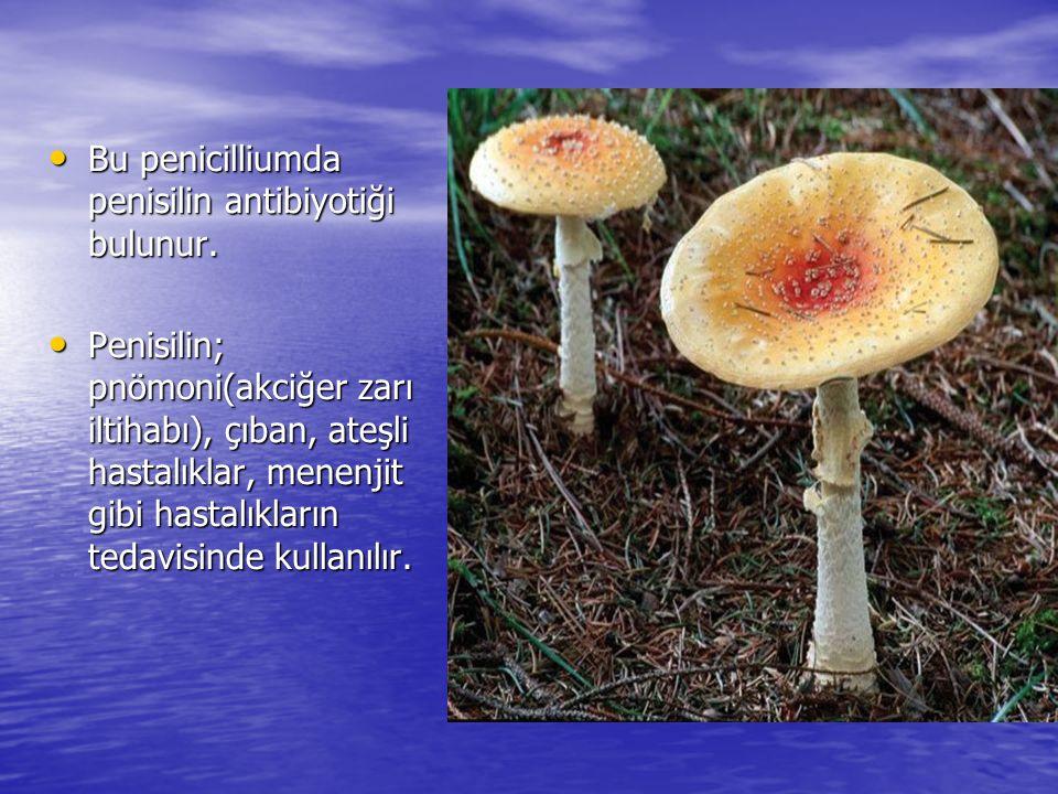 Likenler Mantarlar ve fotosentetik alglerden meydana gelen simbiyotik birlikteliklerdir.