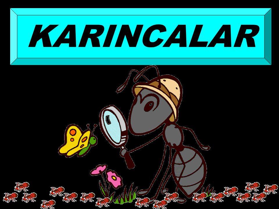 KARINCALAR