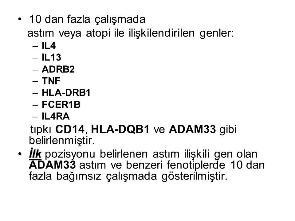 10 dan fazla çalışmada astım veya atopi ile ilişkilendirilen genler: –IL4 –IL13 –ADRB2 –TNF –HLA-DRB1 –FCER1B –IL4RA tıpkı CD14, HLA-DQB1 ve ADAM33 gi