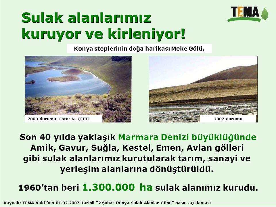 Sulak alanlarımız kuruyor ve kirleniyor! Sulak alanlarımız kuruyor ve kirleniyor! Son 40 yılda yaklaşık Marmara Denizi büyüklüğünde Amik, Gavur, Suğla