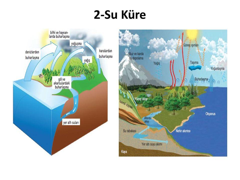 Canlı yaşamı için gerekli olan su ihtiyacının karşılanması bakımından önemli bir katmandır.