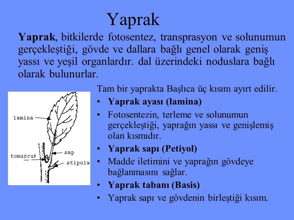 Yaprak Yaprak, bitkilerde fotosentez, transprasyon ve solunumun gerçekleştiği, gövde ve dallara bağlı genel olarak geniş yassı ve yeşil organlardır. d