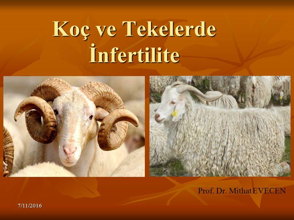 Fertilite – İnfertilite Fertilite – İnfertilite Sterilite Sterilite 7/11/2016
