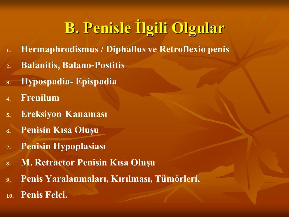 B. Penisle İlgili Olgular 1. 1. Hermaphrodismus / Diphallus ve Retroflexio penis 2. 2. Balanitis, Balano-Postitis 3. 3. Hypospadia- Epispadia 4. 4. Fr