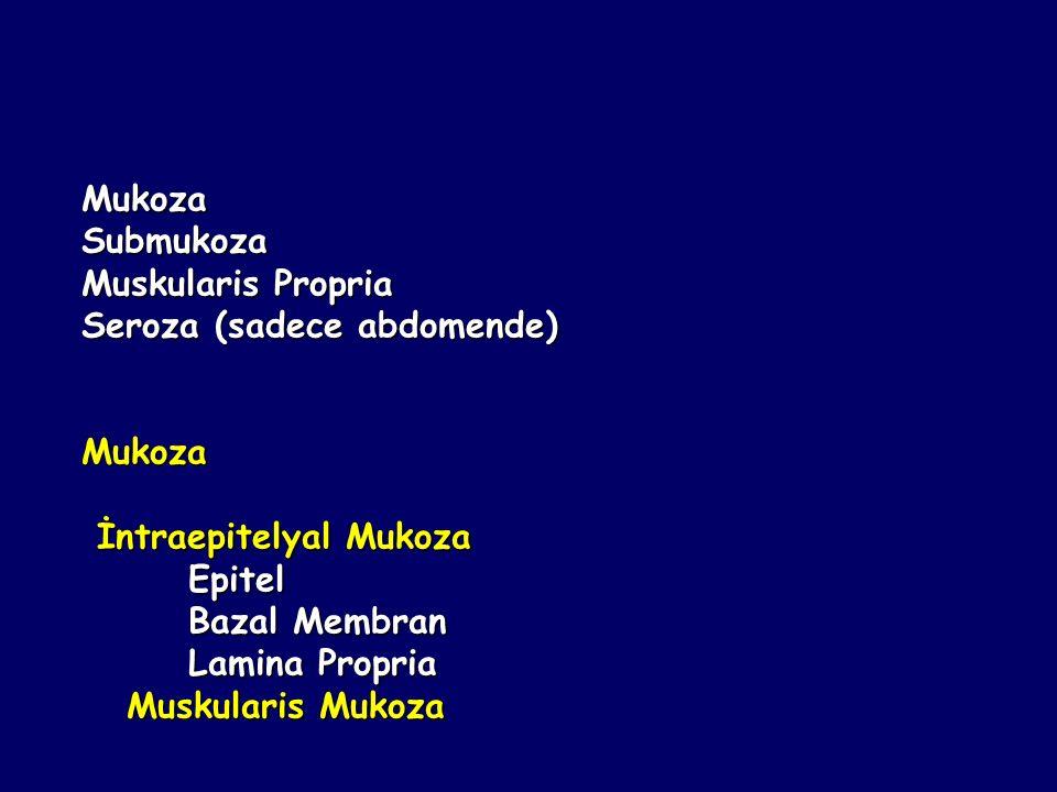 MukozaSubmukoza Muskularis Propria Seroza (sadece abdomende) Mukoza İntraepitelyal Mukoza İntraepitelyal Mukoza Epitel Epitel Bazal Membran Bazal Memb