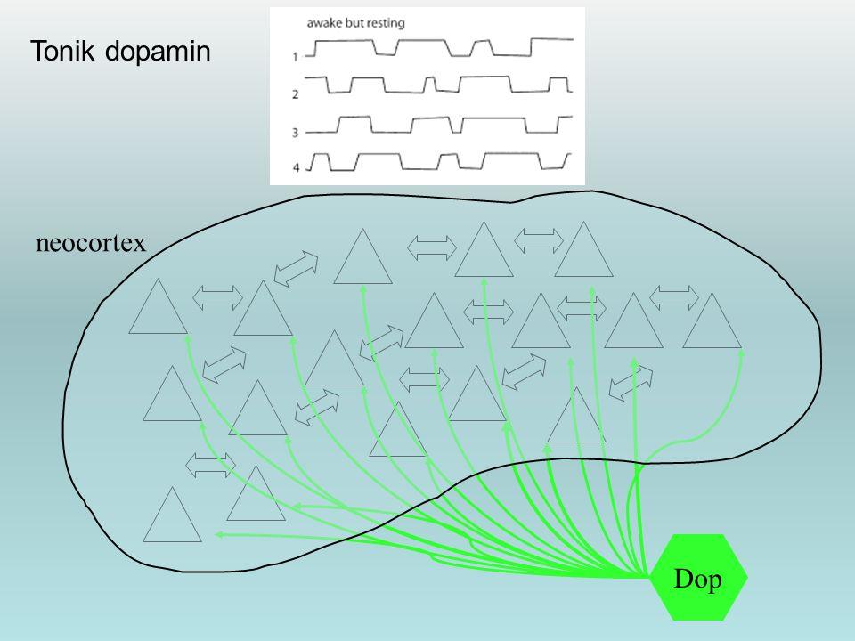 Dop neocortex Tonik dopamin