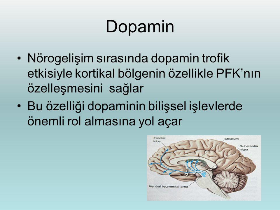 4 2 13 Dop Hipokampus