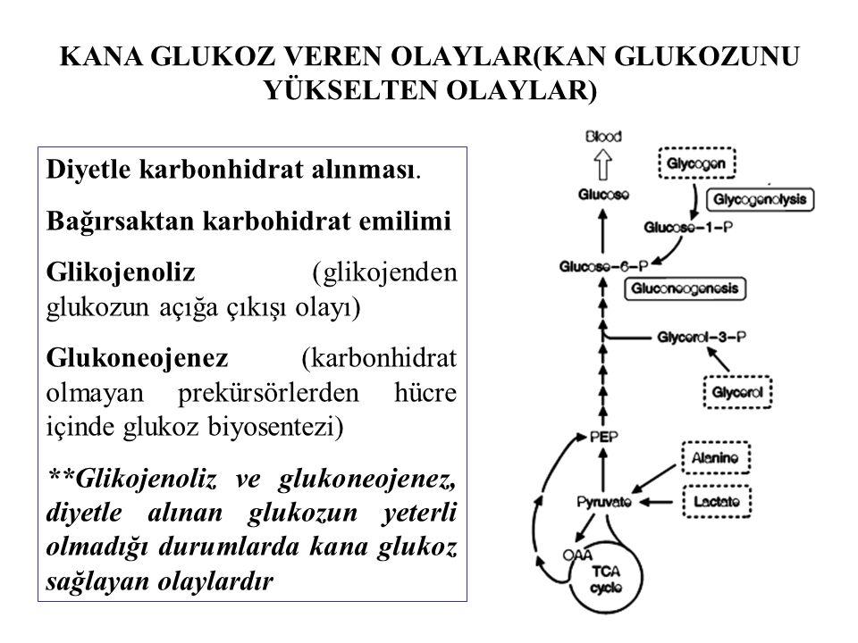 KANA GLUKOZ VEREN OLAYLAR(KAN GLUKOZUNU YÜKSELTEN OLAYLAR) Diyetle karbonhidrat alınması. Bağırsaktan karbohidrat emilimi Glikojenoliz (glikojenden gl