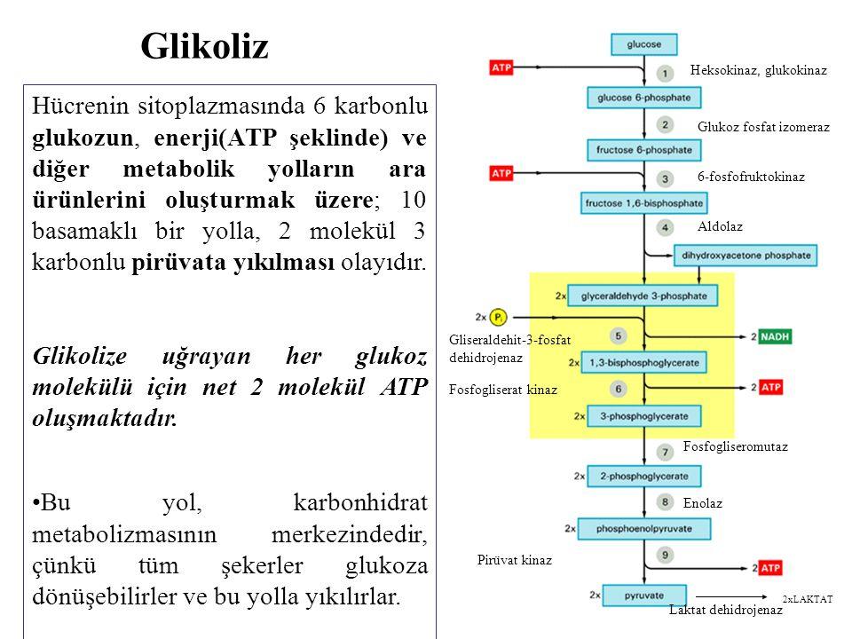 Glikoliz Hücrenin sitoplazmasında 6 karbonlu glukozun, enerji(ATP şeklinde) ve diğer metabolik yolların ara ürünlerini oluşturmak üzere; 10 basamaklı