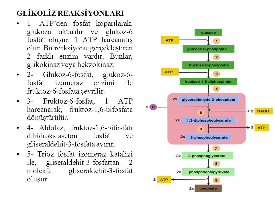GLİKOLİZ REAKSİYONLARI 1- ATP'den fosfat koparılarak, glukoza aktarılır ve glukoz-6 fosfat oluşur. 1 ATP harcanmış olur. Bu reaksiyonu gerçekleştiren