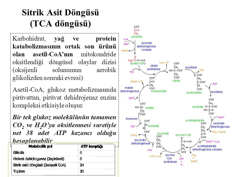 Sitrik Asit Döngüsü (TCA döngüsü) Karbohidrat, yağ ve protein katabolizmasının ortak son ürünü olan asetil-CoA'nın mitokondride oksitlendiği döngüsel