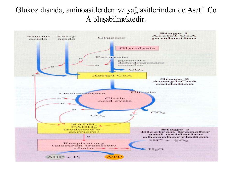Glukoz dışında, aminoasitlerden ve yağ asitlerinden de Asetil Co A oluşabilmektedir.